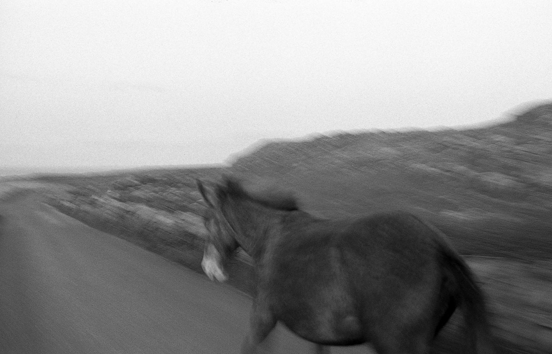 horse of aran