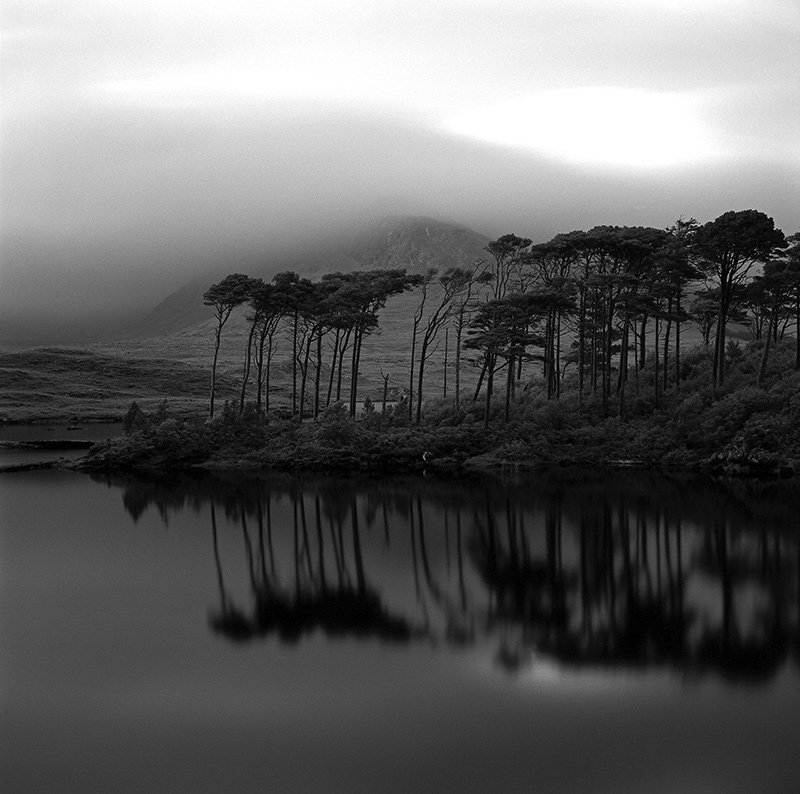 single tree inagh valley derryclare black and white photography connemara Donal Kelly